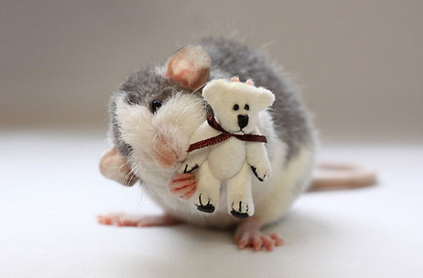 Rats with Teddy Bears 16