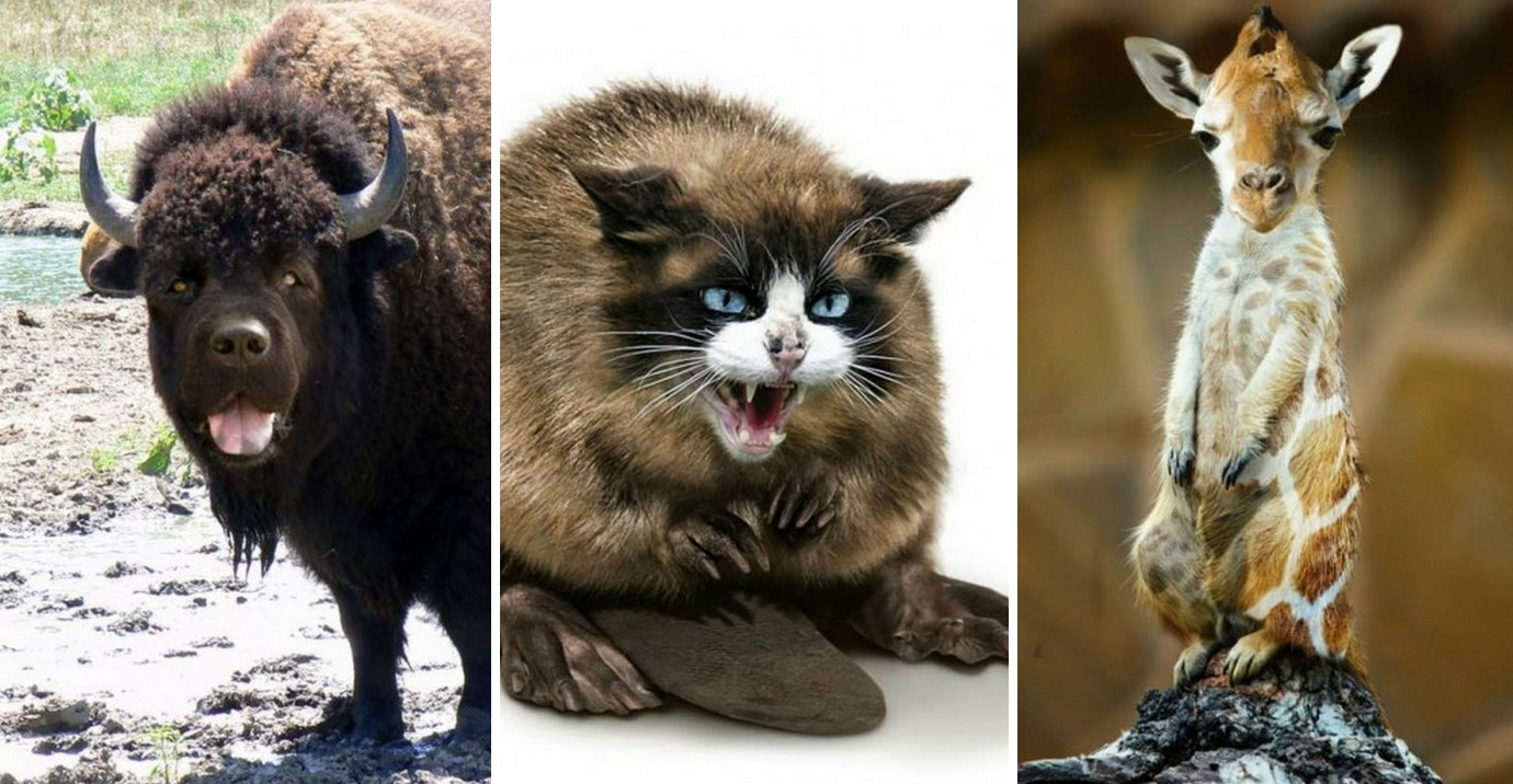 30 Hilariously Terrifying Animal Hybrids That You Can Be Glad Don T Exist