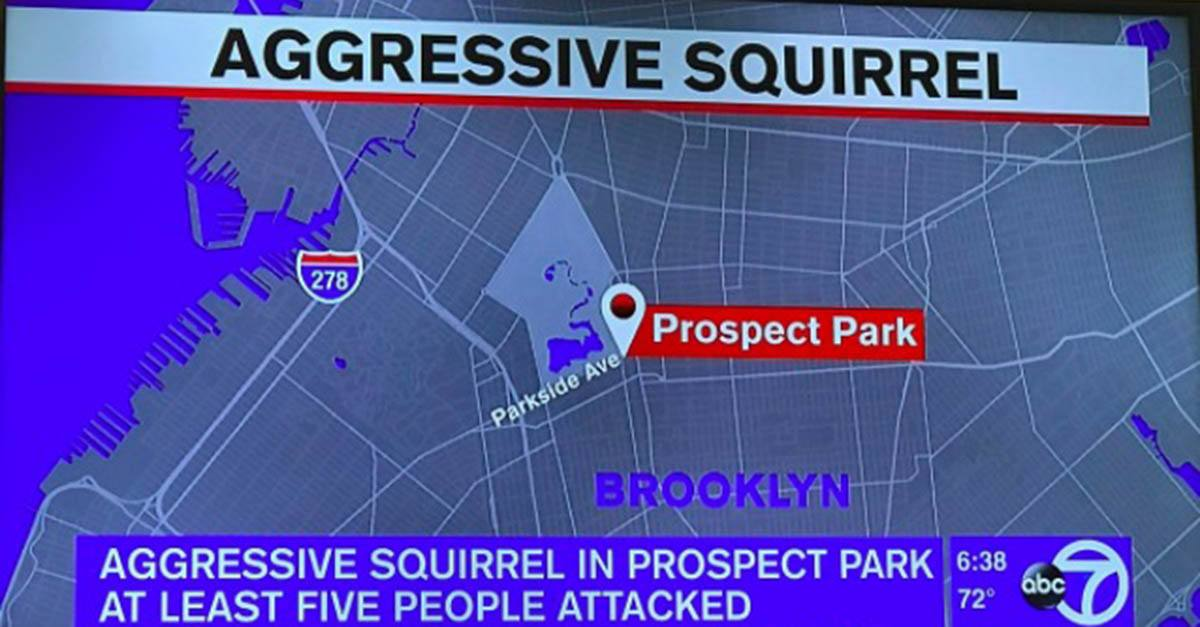 An 'Aggressive' Squirrel Is Terrorizing Brooklyn Residents and It's Not as Funny as It Sounds