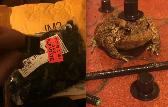 "b6f468b42225f via: Reddit. ""Accidentally bought my toad 100 top hats instead of one while  I was drunk online shopping…"