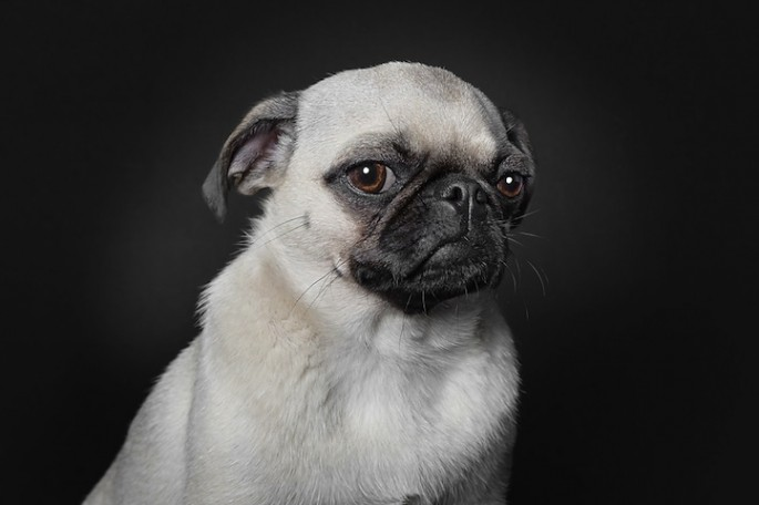 Serious Dog Portraits - 01