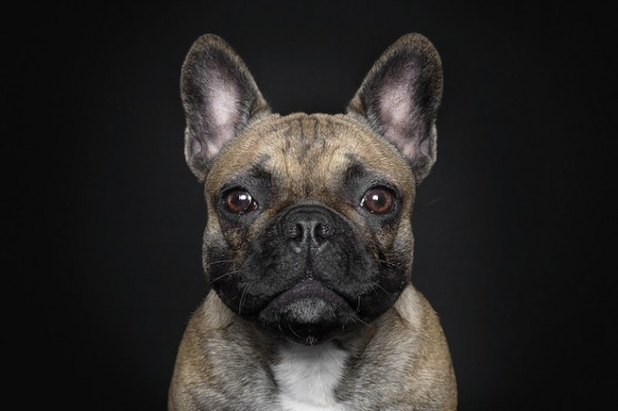 Serious Dog Portraits - 02