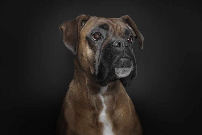 Serious Dog Portraits - 03