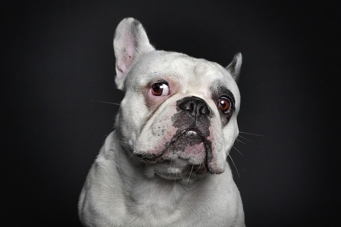 Serious Dog Portraits - 07