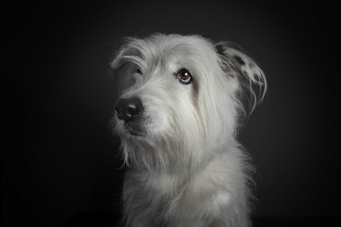 Serious Dog Portraits - 09