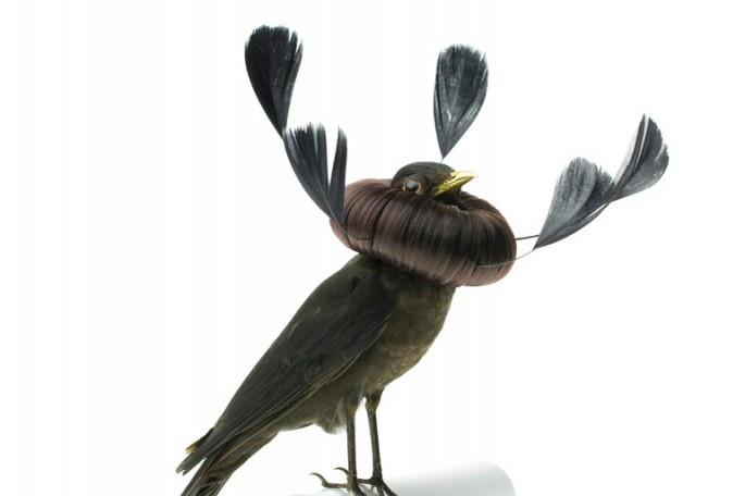 Taxidermized Birds 2