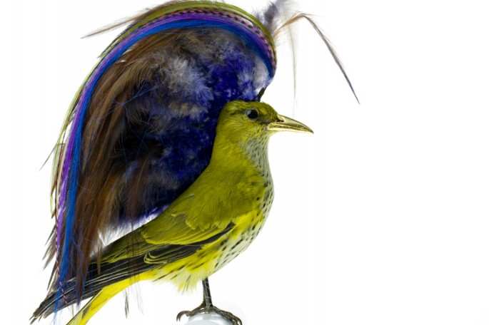 Taxidermized Birds 4