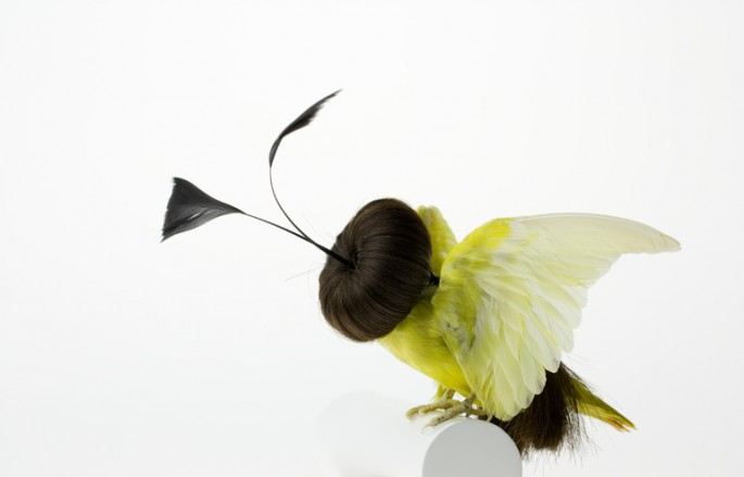 Taxidermized Birds 7