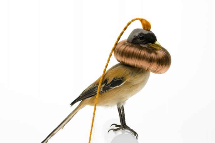 Taxidermized Birds 8