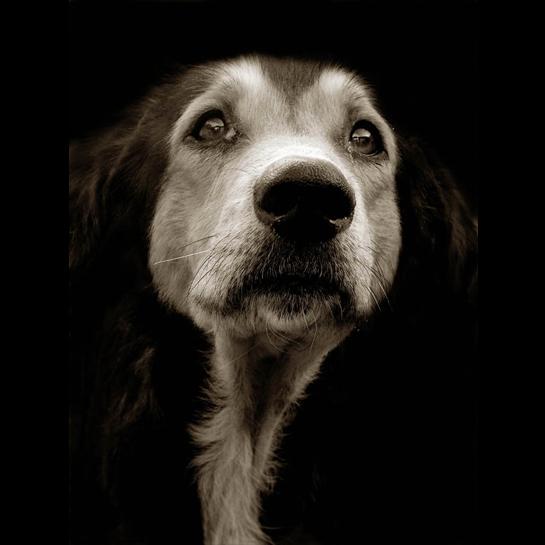 Traer Scott's Shelter Dogs - 02