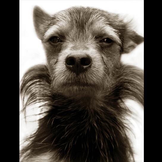 Traer Scott's Shelter Dogs - 03
