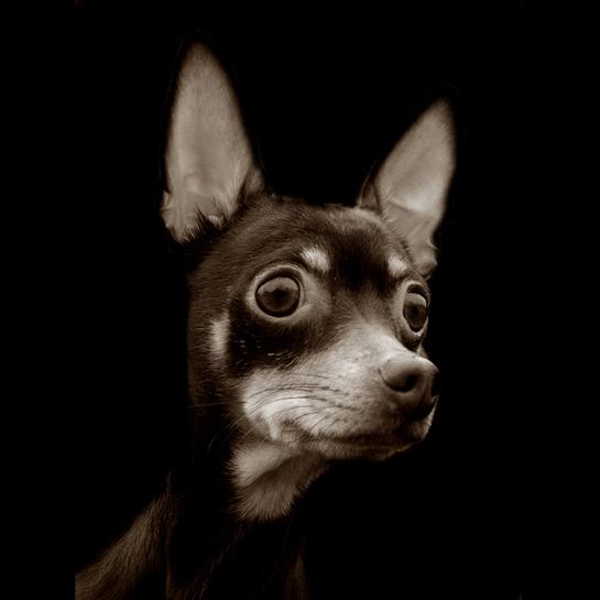 Traer Scott's Shelter Dogs - 04