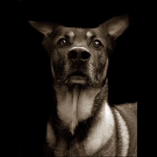 Traer Scott's Shelter Dogs - 05