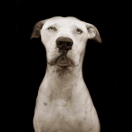 Traer Scott's Shelter Dogs - 06