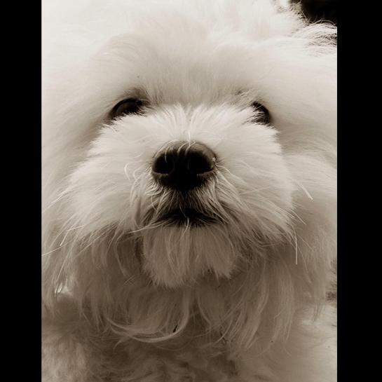Traer Scott's Shelter Dogs - 07