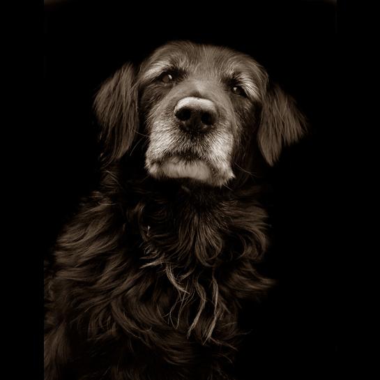 Traer Scott's Shelter Dogs - 08