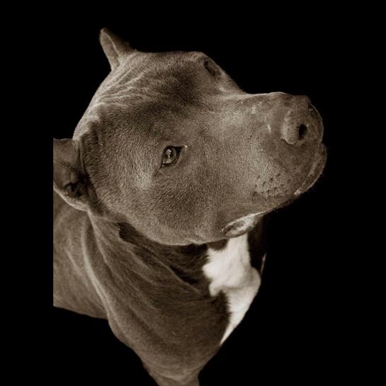 Traer Scott's Shelter Dogs - 09
