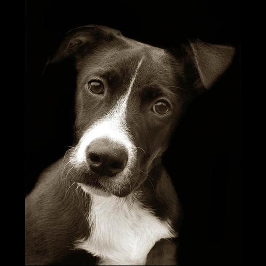 Traer Scott's Shelter Dogs - 11