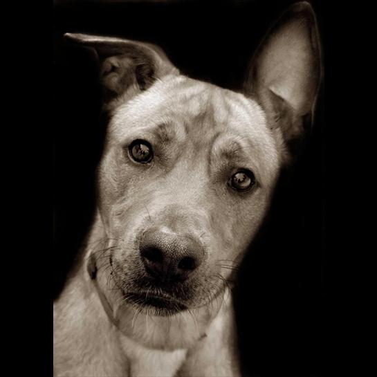 Traer Scott's Shelter Dogs - 12