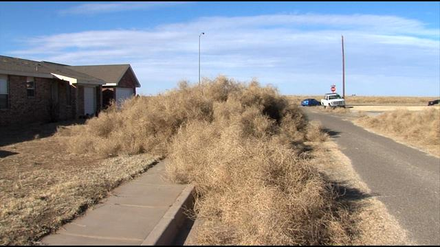 Tumbleweed in Clovis, NM - 05