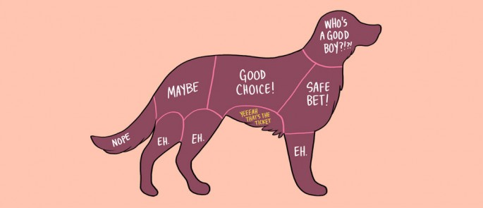 Where to Pet 15