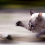 Wildlife photos - Cat and mouse