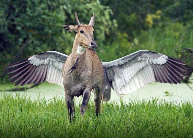 antelopebirdthing