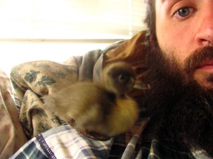 beard nest (1)