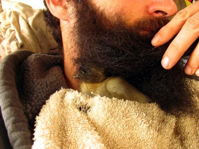 beard nest (9)