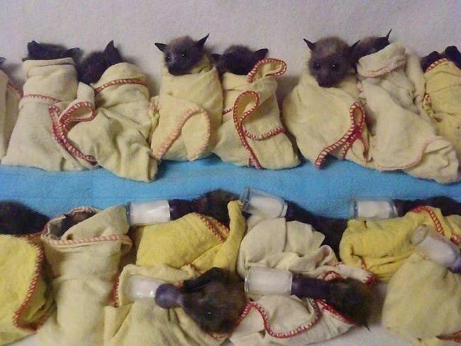 blanketgroup