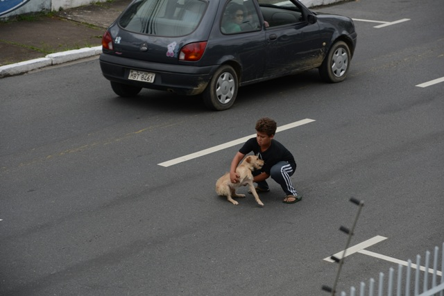 boy saves puppy (1)