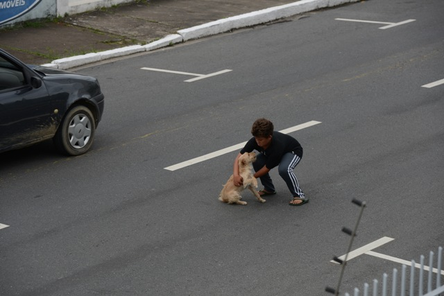 boy saves puppy (2)