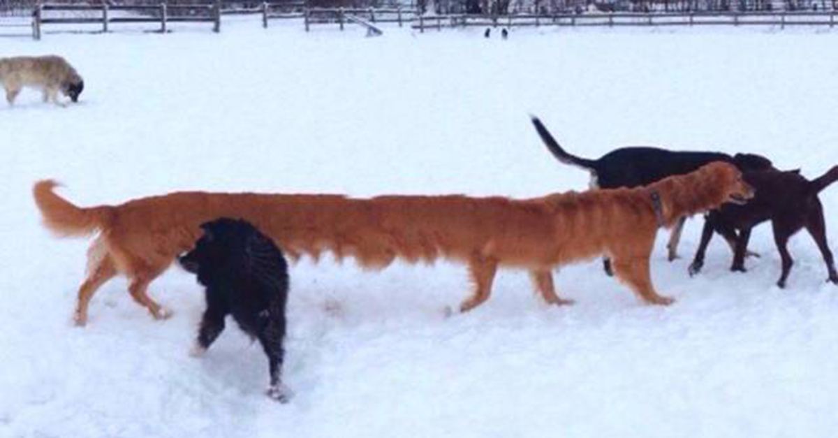 dog feature8 - 30+ how to take funny panoramic photos