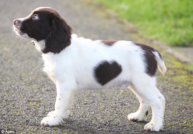 dog with heart - 02