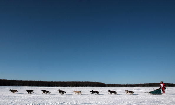 These Dogs Are in Training for Alaska's Famous Sled Race