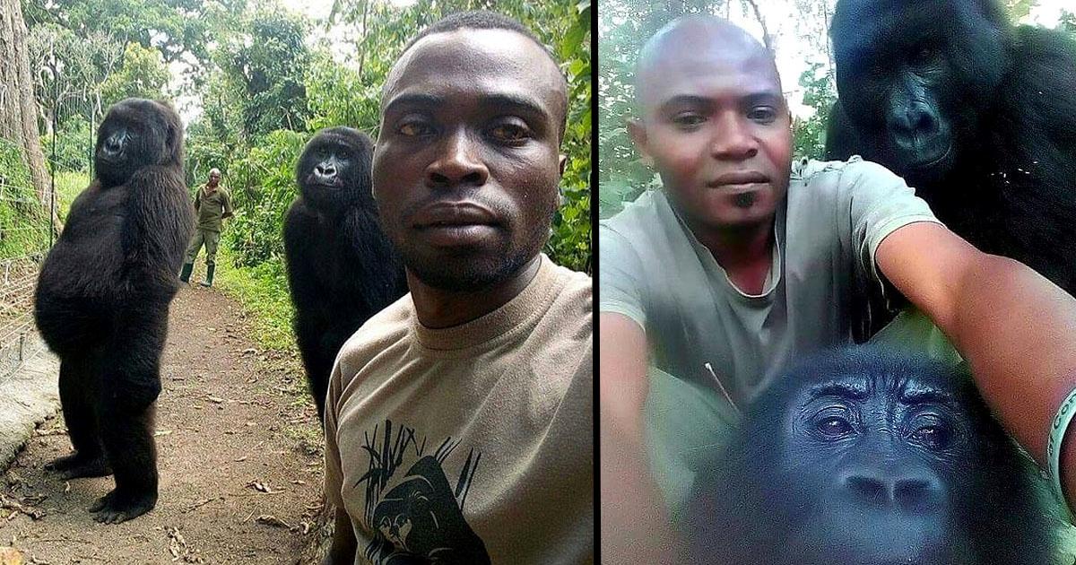 Image result for gorilla selfies