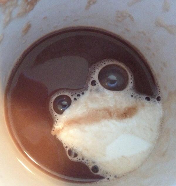 frog foam face