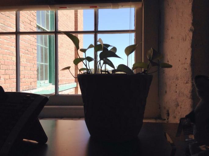 plant-playdate-22
